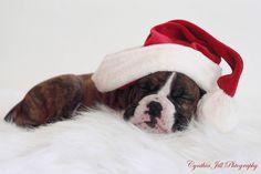 Santa's LIttle Helper | Flickr - Photo Sharing!