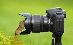 A Wild Bank Vole Taking Selfie
