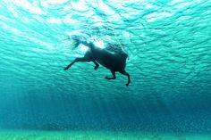 Seahorse by Kurt Arrigo