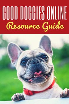 Online Dog Training Resource Guide