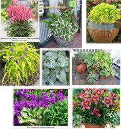 patio perrenials.  Must start planting!