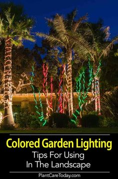 Tips On Using Colored Landscape Lighting In The Garden is part of garden Lighting Color - Using colored landscape lighting in your garden can add a unique drama to the landscape, use it sparingly, and only after experimenting [LEARN MORE] Garden Lighting Tips, Outdoor Lighting Landscape, Landscape Lighting Design, Backyard Lighting, Outdoor Landscaping, Lighting Ideas, Rope Lighting, Landscaping Ideas, Patio Ideas