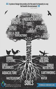Permaculture now a trendy word bandied around by those who have little practical experience. It is a deep topic and can really only be used well and properly by attending a design course..