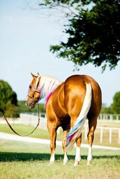 Amamos Cavalos Demais... ♥