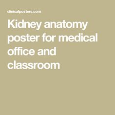 Kidney anatomy poster for medical office and classroom