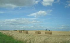 Funen Denmark. On our hikes we walked past fields like this.