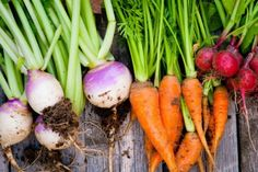 19. Turnips - 25 Foods You Can Re-Grow Yourself from Kitchen Scraps