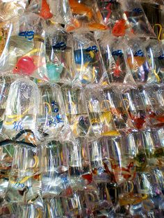 The Goldfish Markets.