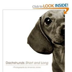 Dachshunds - Short and Long
