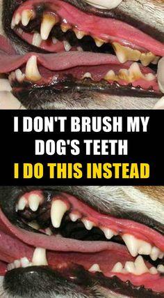 Brushing your dog's teeth isn't fun. Giving your dog an option to keep his teeth. - Brushing your dog's teeth isn't fun. Giving your dog an option to keep his teeth clean without - Dog Information, Teeth Cleaning, Cleaning Tips, Cleaning Dogs Ears, Dog Teeth, Dog Care Tips, Dog Supplies, Dog Grooming, Cockapoo Grooming