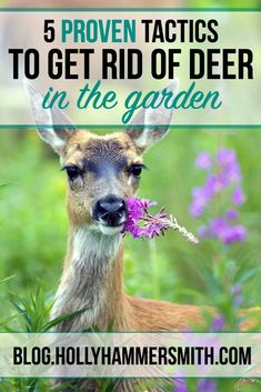 Get Rid of Deer - Deer can cause severe damage to vegetable gardens, trees and ornamental shrubs. Get rid of deer for good by implementing these proven tactics.