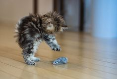 the littlest pounce ever..