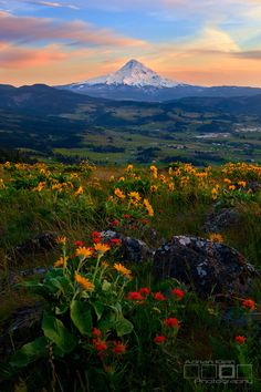 🇺🇸 Spring blooms basking in the remaining minutes of sunset light in the Columbia River Gorge (Mt Hood, Oregon) by Adrian Klein 🌸 Beautiful World, Beautiful Places, Beautiful Pictures, Beautiful Scenery, Places To Travel, Places To See, Mount Hood National Forest, Columbia River Gorge, Oregon Travel
