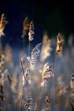 Photo Frosty Weeds by Ruud van der Weel on Bokeh, Beautiful Flowers, Beautiful Pictures, Wallpaper Gallery, Foto Art, Art Plastique, Light And Shadow, Beautiful World, Wild Flowers