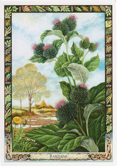 Hot Lá Burdock – Druid Plant Oracle bài tarot