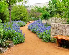 Lady Bird Johnson Wildflower Center in Austin has some great xeroscape ideas that save water and are native to the area (less effort).