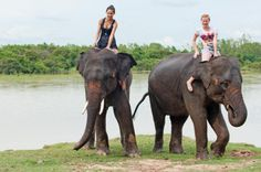 Private Tour: Jungle Adventure from Goa Including Elephant Ride and Lunch Discover the wilderness of Goa on a full-day tour to a wildlife preserve where you ride and bathe with elephants. Visit a beautiful jungle camp inside Bhagwan Mahavir Wildlife Sanctuary, walk through the forest to a 12th-century temple, ride into the jungle on an elephant, watch a group of elephants bathe in a lake, and tap into your inner Tarzan as you zipline over the treetops. Includes private guid...