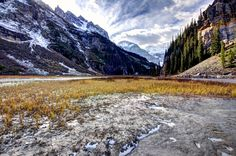 Yeloow grass at end of Lake Louise, in sheet of ice.