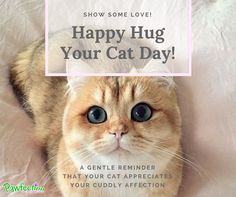 We all know that sometimes its harder to get your cats affection that pulling teeth. But give them a hug, deep down they love it! Hug Your Cat Day, Deep Down, Hard To Get, Teeth, You Got This, Appreciation, Love, Cats, Happy