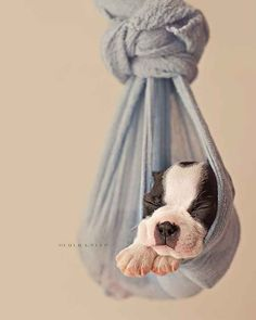 This Newborn Puppy Photoshoot Will Make Your Day