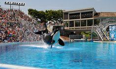 Sea World, San Diego, 2008 by Joe_B, via Flickr