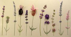 Stitching Lavender