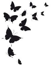 Silhouette stock photos and royalty-free images, vectors and illustrations Butterfly Stencil, Butterfly Art, Butterfly Design, Butterflies, Animal Silhouette, Silhouette Design, Silhouette Cameo, Stencil Patterns, Stencil Designs
