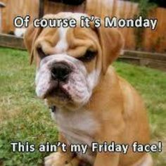 Of course its Monday....