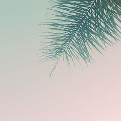 Palm * Where does inspiration come from? * The Inner Interiorista