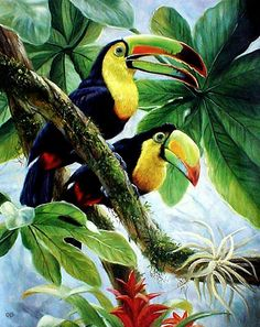 TOUCANS TROPICAL BIRD PRINT BY EDDIE GLASS REPRODUCTION ON PAPER
