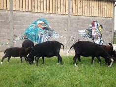 louis masai masai streetart | 2014