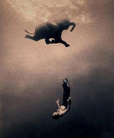From Harmony with Animals project by Gregory Colbert.  j