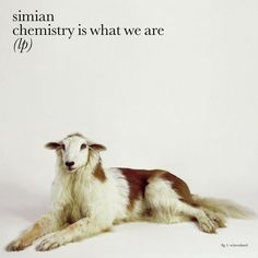 Carátulas de música Frontal de Simian - Chemistry Is What We Are. Portada cover Frontal de Simian - Chemistry Is What We Are Digital Creative Agency, Snow Patrol, Image Makers, My Scrapbook, World Of Fashion, Art Direction, Album Covers, Chemistry, Pop Culture