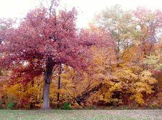 Iowa/deb fall