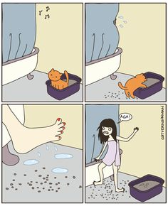 Cat vs Human. Why I got a covered litter pan!