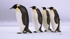 Dyra i snøen