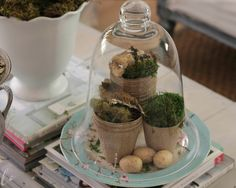 Shabby Sweet Cottage: Spring In The House