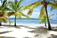 Summertime is beach time at ClubHotel Riu Bachata – Hotel in Puerto Plata – Hotel in Dominican Republic - RIU Hotels & Resorts All Inclusive Vacations, Best Vacations, Vacation Trips, Vacation Ideas, Samana, Beach Hotels, Hotels And Resorts, Amber Cove Dominican Republic, Riu Palace Punta Cana