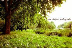 english meadow.