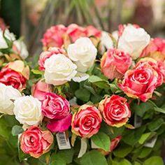 Ob farbenfroh oder schlicht. Wir binden für jeden den perfekten #Blumenstrauß. #Schnittblumen #verschenken #Entschuldigung #Geburtstag #Hochzeit #Muttertag Gerbera, Flowers, Plants, Chrysanthemums, Excuse Me, Cut Flowers, Mother's Day, Flora, Royal Icing Flowers