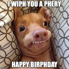 happy birthday funny * happy birthday wishes & happy birthday & happy birthday wishes for a friend & happy birthday funny & happy birthday wishes for him & happy birthday sister & happy birthday quotes & happy birthday greetings Birthday Meme Dog, Funny Happy Birthday Song, Happpy Birthday, Happy Birthday Animals, Happy Birthday Wishes For A Friend, Happy Birthday For Him, Funny Birthday Quotes, Birthday Quotes Funny For Him, Birthday Ideas