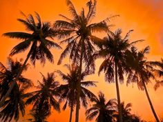 Sunset in the palm trees on an island in Cambodia.   trueworldtravels.com
