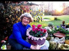 My Portland Cement Flower Pot don't stop trying in Ga. U.S.A. - YouTube