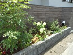 シマトネリコ花壇 Exterior, Gardening, Japanese, Music, Nature, Kitchen, Plants, Musica, Musik
