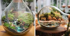 These two ladies, Lina Cirilo and Laura Gonçales, create and sell tiny, self-sustaining ecosystems in glass jars, bottles, and other containers. Best Terrarium Plants, Terrarium Jar, Garden Terrarium, Glass Bowls, Glass Jars, Hanging Plants, Indoor Plants, Self Sustaining Terrarium, Diy Garden Fountains