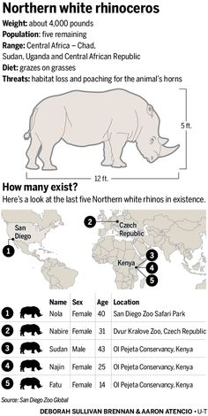 Can scientists clone a rhinoceros? Stem cell technology may offer a better breakthrough.