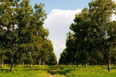 Royalty Pecan Farms...so beautiful. I love all of the green!