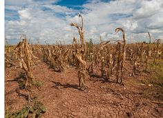 Floods and droughts are an increasingly costly problem for farmers, ranchers, taxpayers, and downstream communities. so make a healthier soil