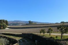 Vineyard at the border of the Dao & Beira regions or Portugal, courtesy Worldwine Marketing. #portuguese #wine