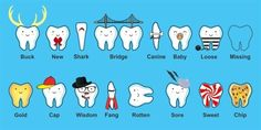 Which one is your favorite tooth?